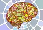Das menschliche Gehirn, das nach Bildung dürstet